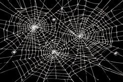 - Örümcek Ağı Etiket 10,5 x 7 cm 12 Adet
