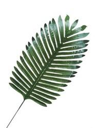 Parti Dünyası - Palmiye Yaprak 20 x35 Cm 3 Adet