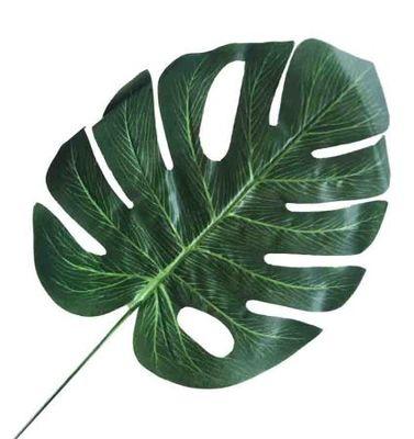 Yaprak Devetabanı 23 cm